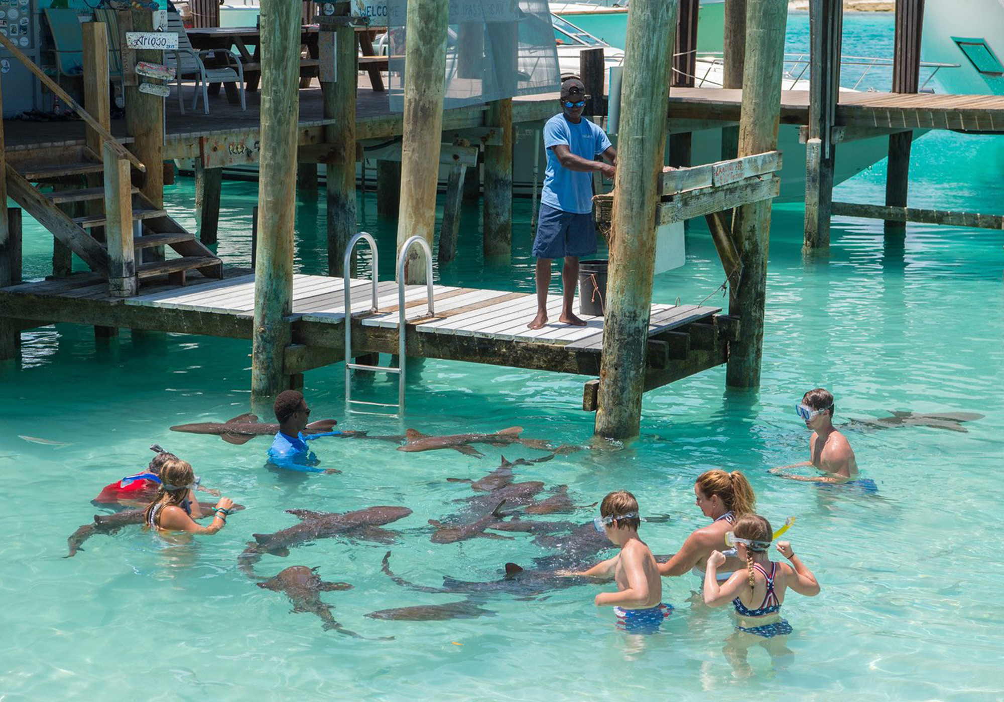 Protecting Sharks From Finning